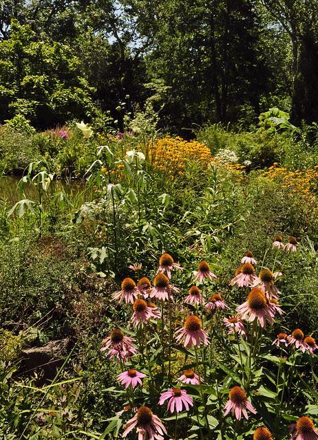 Pond Garden (4)
