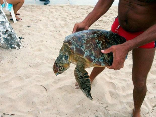Tartaruga foi encontrada na manhã desta segunda (3) na praia de Ponta Negra, em Natal (Foto: André Henrique silva)