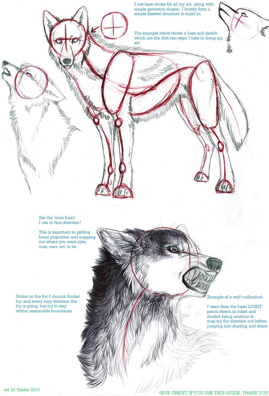 動物 鳥 犬 猫 狼 馬 鼠 描き方まとめ萌えイラスト上達法 お絵かき