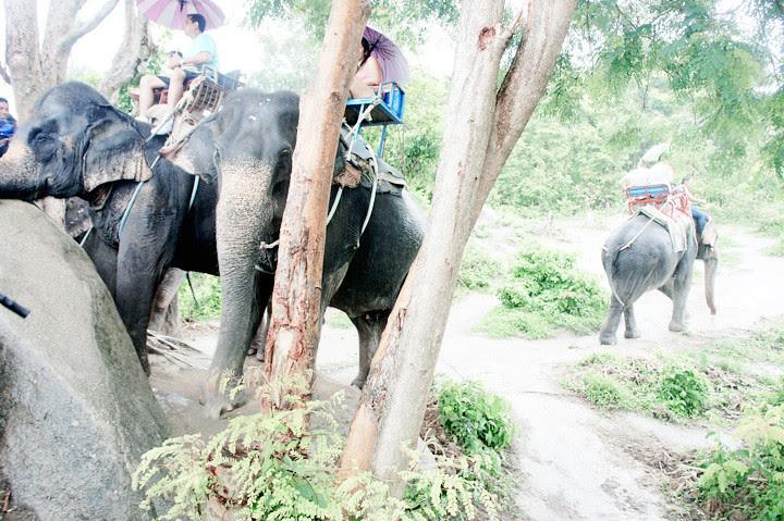 phuket elephant riding typicalben 10