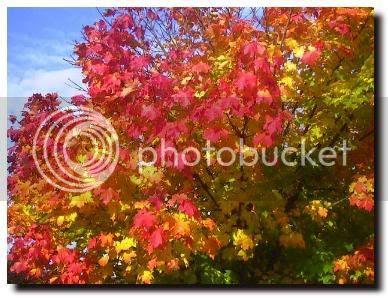 photo autumn9f.jpg