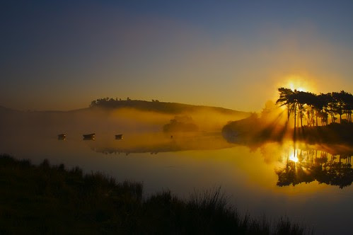 Mistycal Morning