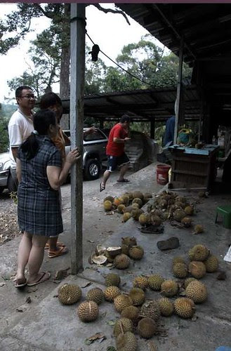 durian_06