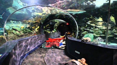 Sleeping With The Sharks Ripleys Aquarium