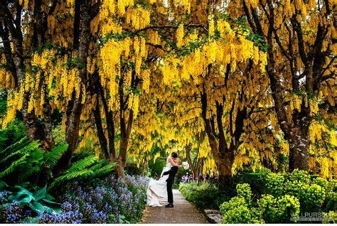 VanDusen Gardens Wedding   Will Pursell Photo