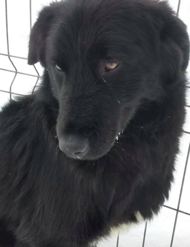 Solan – 2-3 year old male Cross-Breed