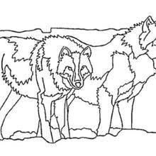 Coloriages Coloriage Dun Couple De Loups Frhellokidscom