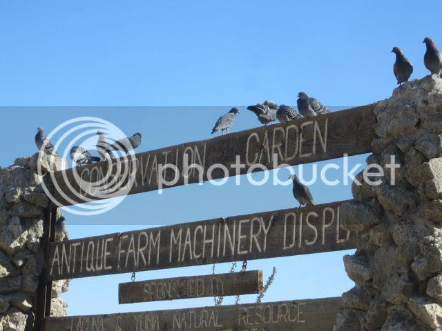 photo pigeons_zps5fa04873.jpg