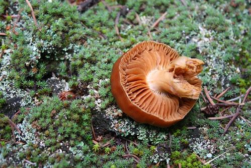 Overturned mushroom