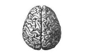 Cérebro Humano (B&W)