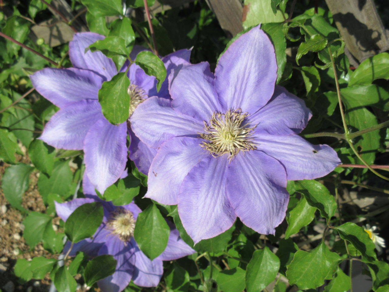 Diy Heaven5月の花13種類 お見事です