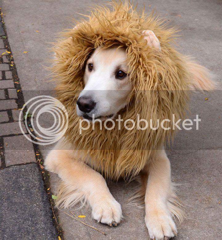 photo lion_zpsa31b7cf7.jpg