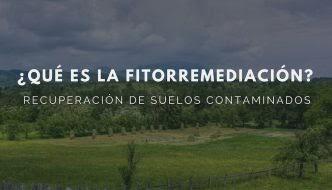 FITORREMEDIACIÓN: LA GRAN ALTERNATIVA NATURAL PARA RECUPERAR SUELOS CONTAMINADOS