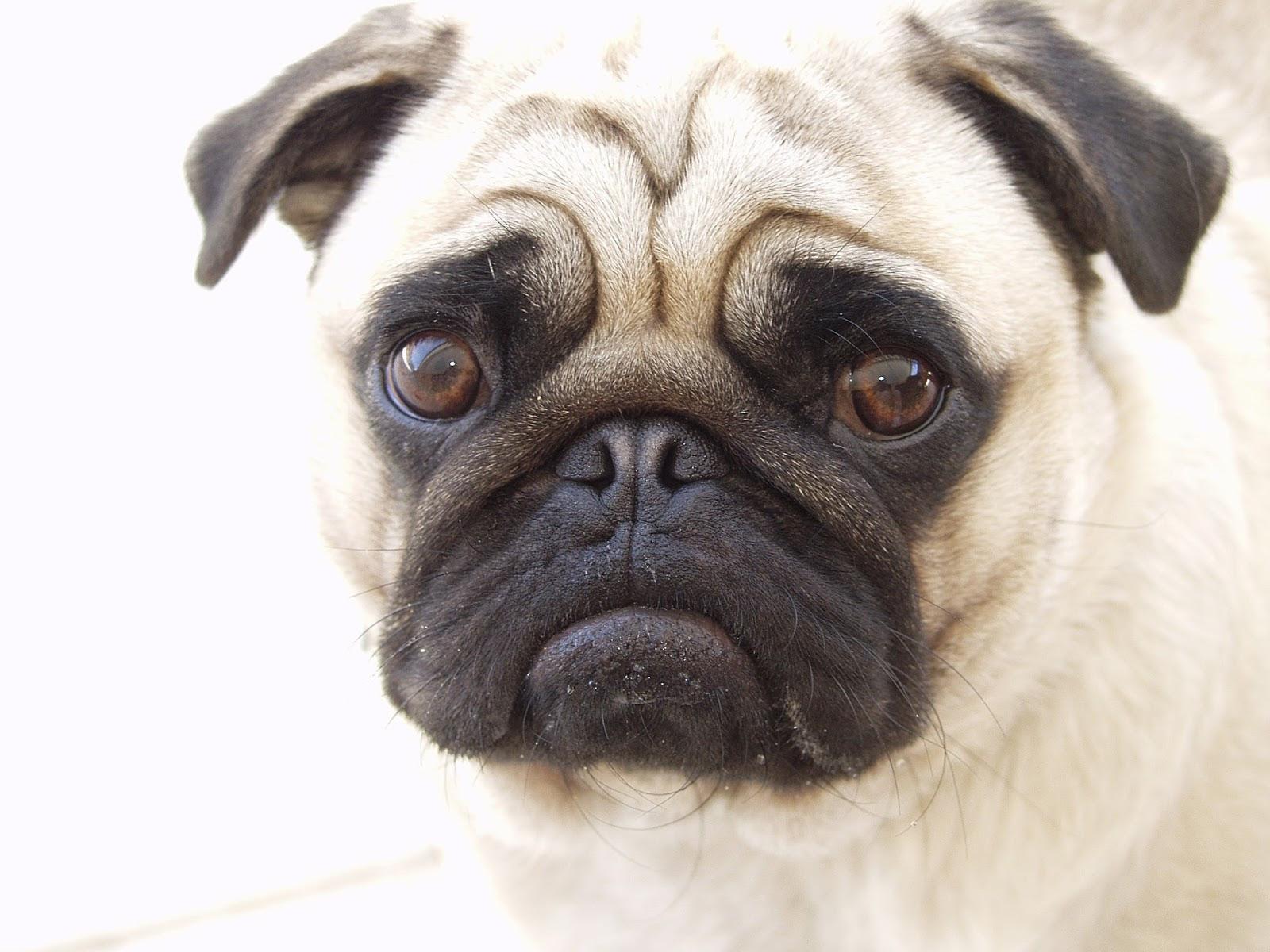 نتيجة بحث الصور عن صور كلاب