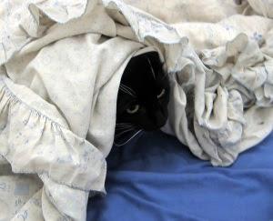 hide-cat1
