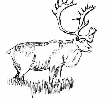 realistic animal coloring pages realistic animal