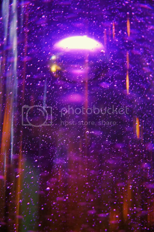 Purple Fantasy: Bubbles at CosmoCaixa, Barcelona [enlarge]