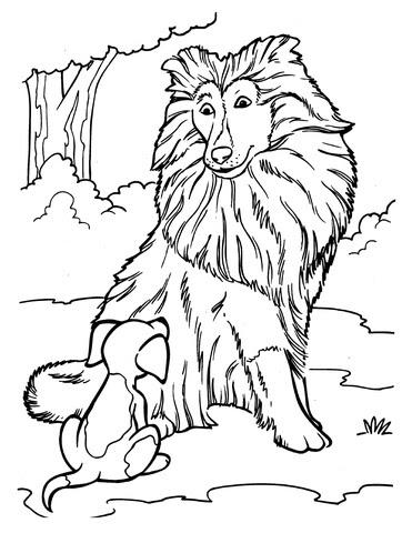 Disegno Di Cane Da Pastore Scozzese Con Cucciolo Da Colorare