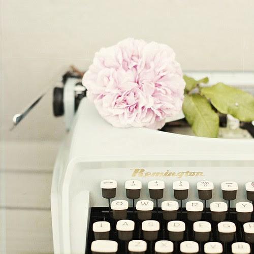 typewriter, rose, pink, beautiful