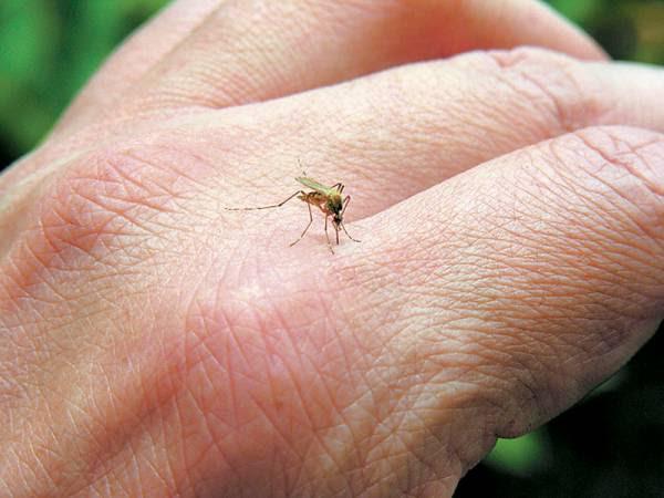 Ερώτηση Πατσαρίνου για τα κουνούπια