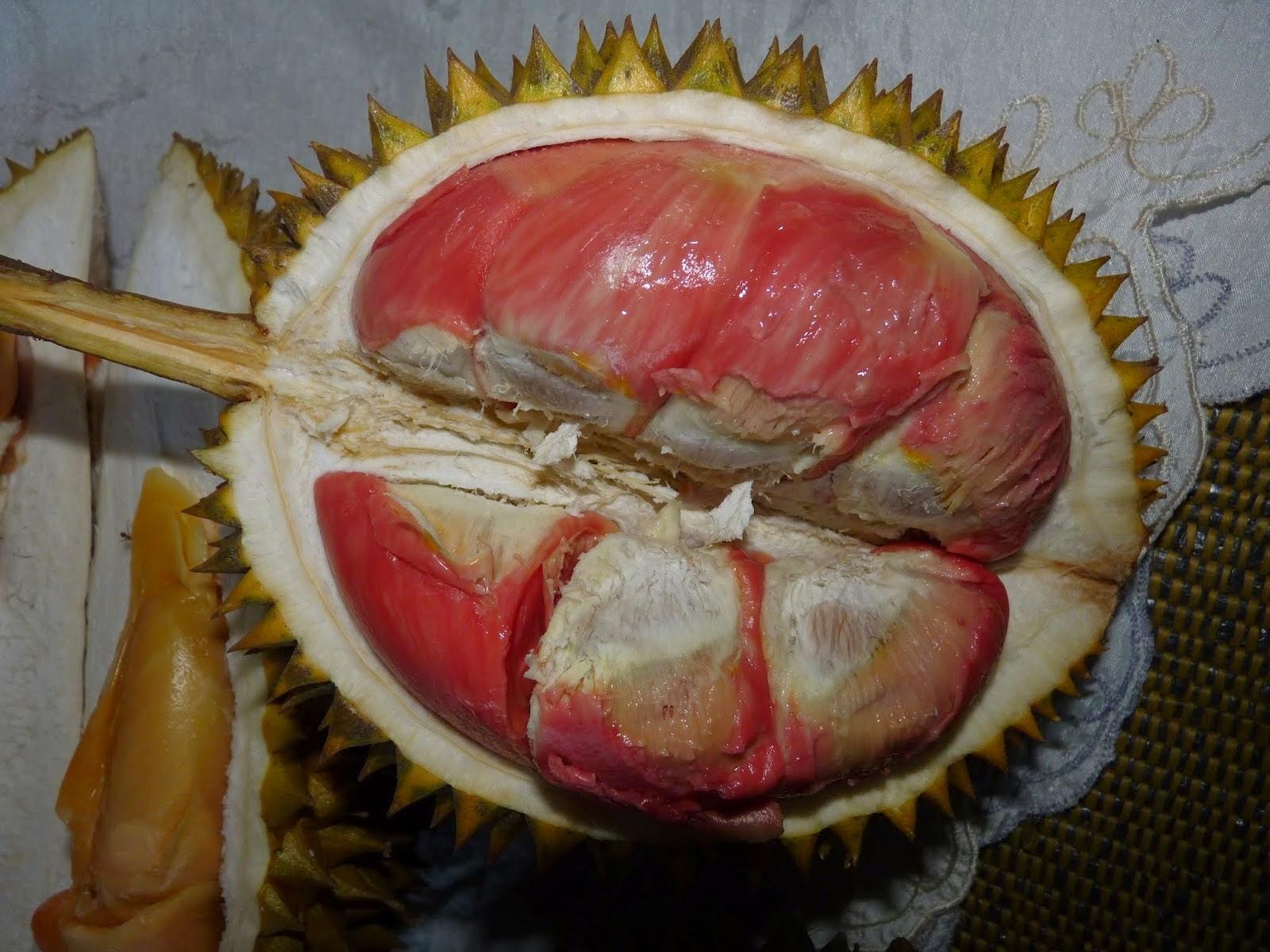 Buah yang memiliki aroma khas  dan kelembutan isi buahnya menciptakan banyak orang suka deng Durian Merah Banyuwangi yang Unik