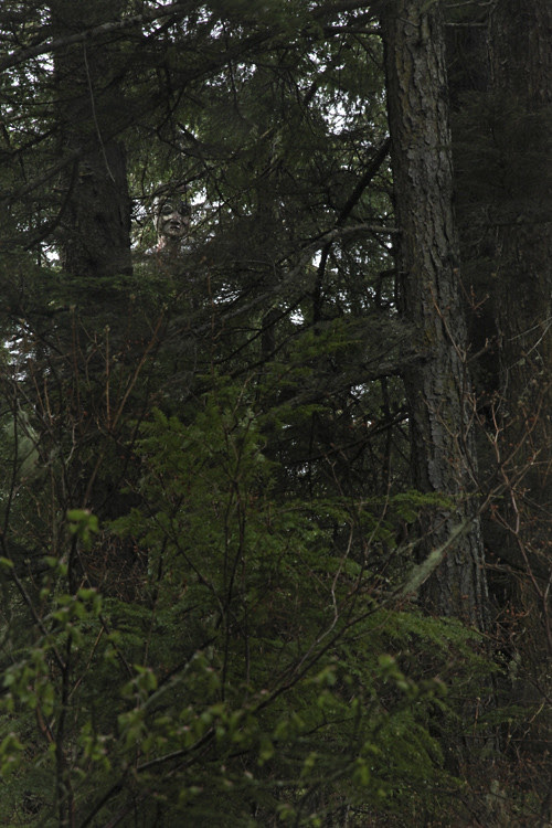 face from totem pole through trees, Totems Historic District, Kasaan, Alaska