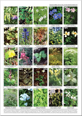 живущим растения леса беларуси в картинках с названиями согласитесь