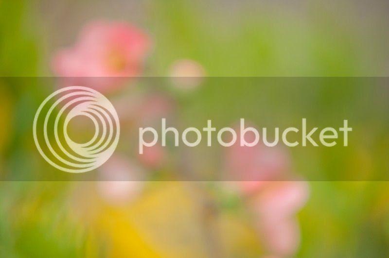 photo spring4_zps1accce8e.jpg
