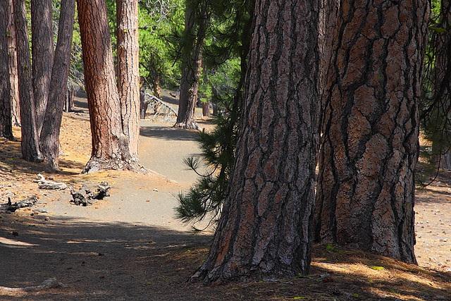 IMG_1646 Cinder Cone Trail