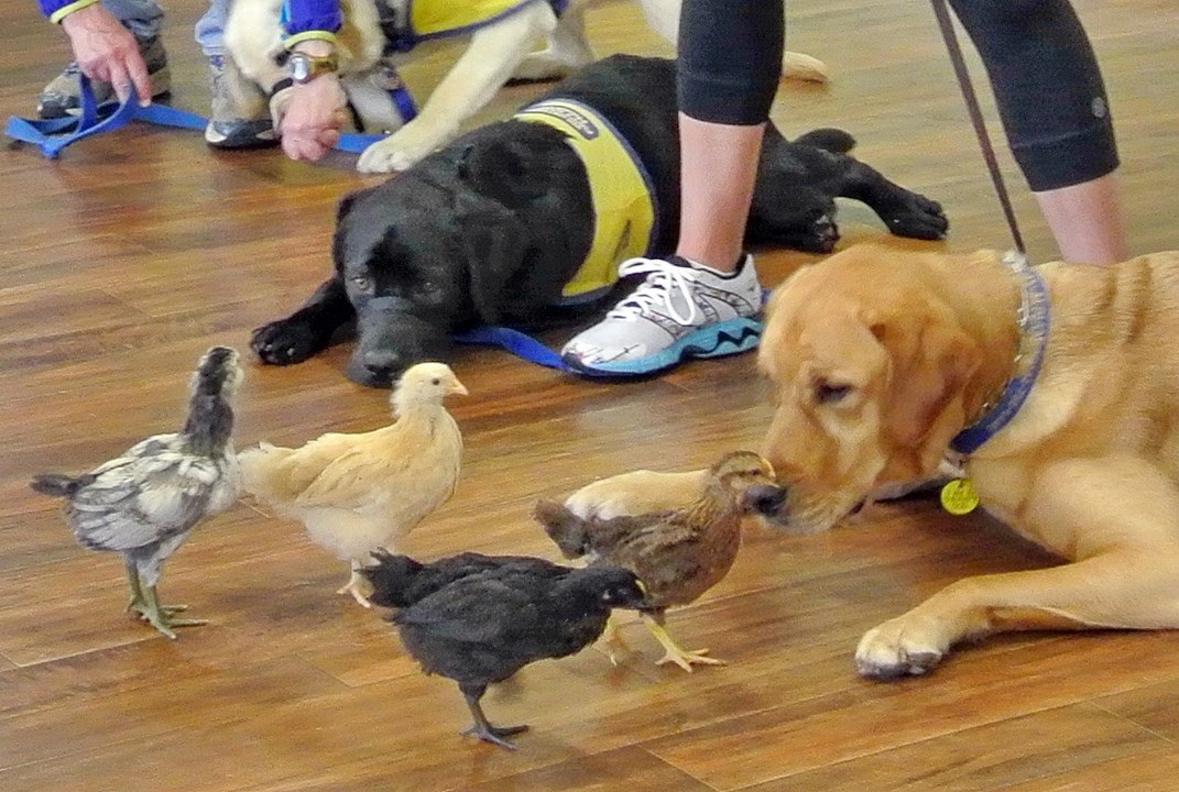 Puppy Training Classes Near Me In Philippines