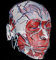 Un estudio previo del doctor Cavadas. (Foto: EL MUNDO)