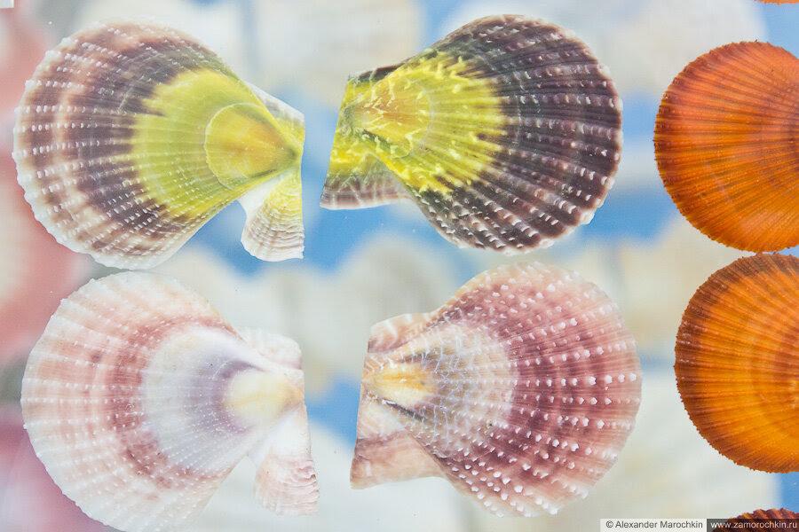 Разноцветные раковины моллюсков в музее ракушек Корфу