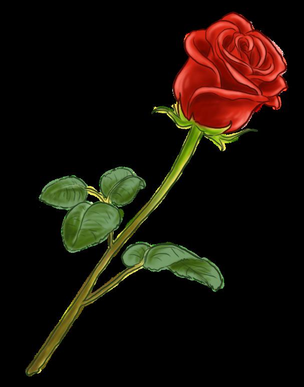 """Résultat de recherche d'images pour """"rose rouge dessin"""""""