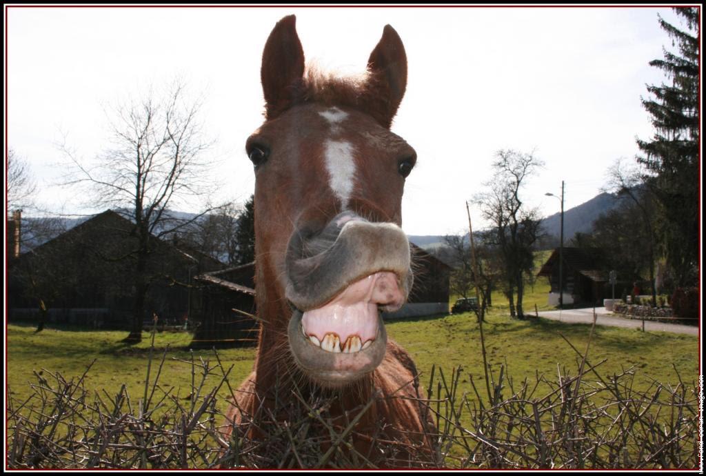 Gif Cheval Drole | Funny Gif