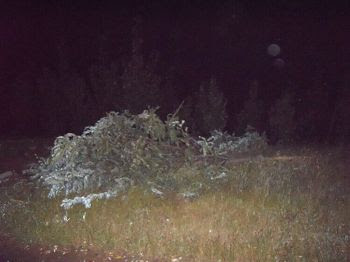 '车拦腰撞断了路边的树'