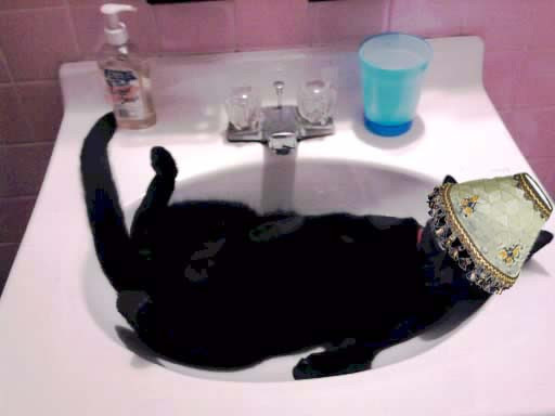 The life of the #Blackkittypawty - The Aftermath.
