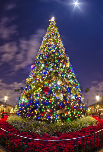 Epcot's Christmas Tree by Tom.Bricker, on Flickr