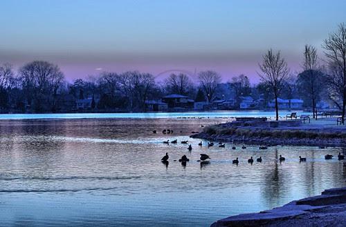 Orillia - Geese and Ducks Bathing at Veteran's Park
