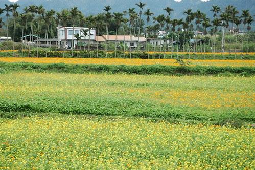 台九線農村景色