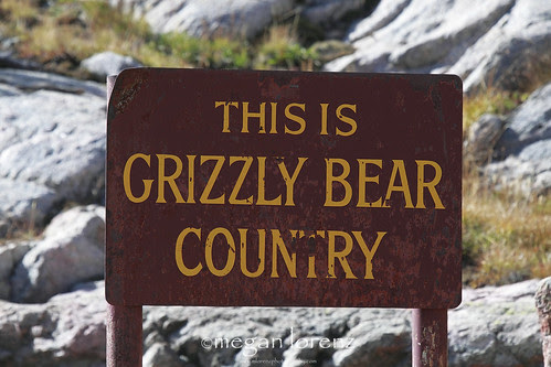 Grizzly Bear Country by Megan Lorenz
