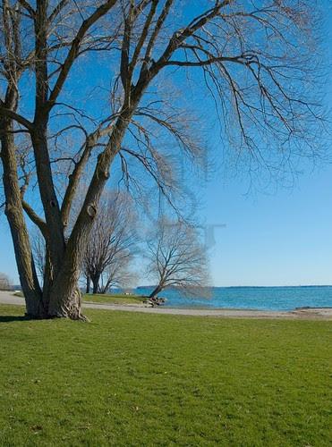 Orillia - Spring Trees in the park