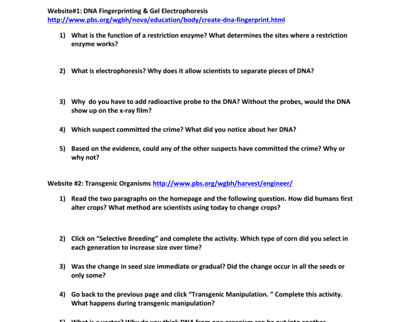 Dna Fingerprinting Worksheet Answer Key Pbs - worksheet