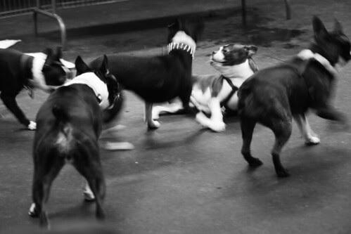 Terrier Mayhem