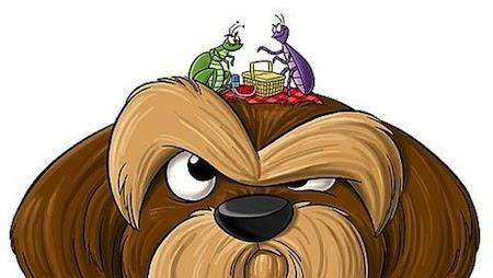 Cómo eliminar las pulgas en los Perros