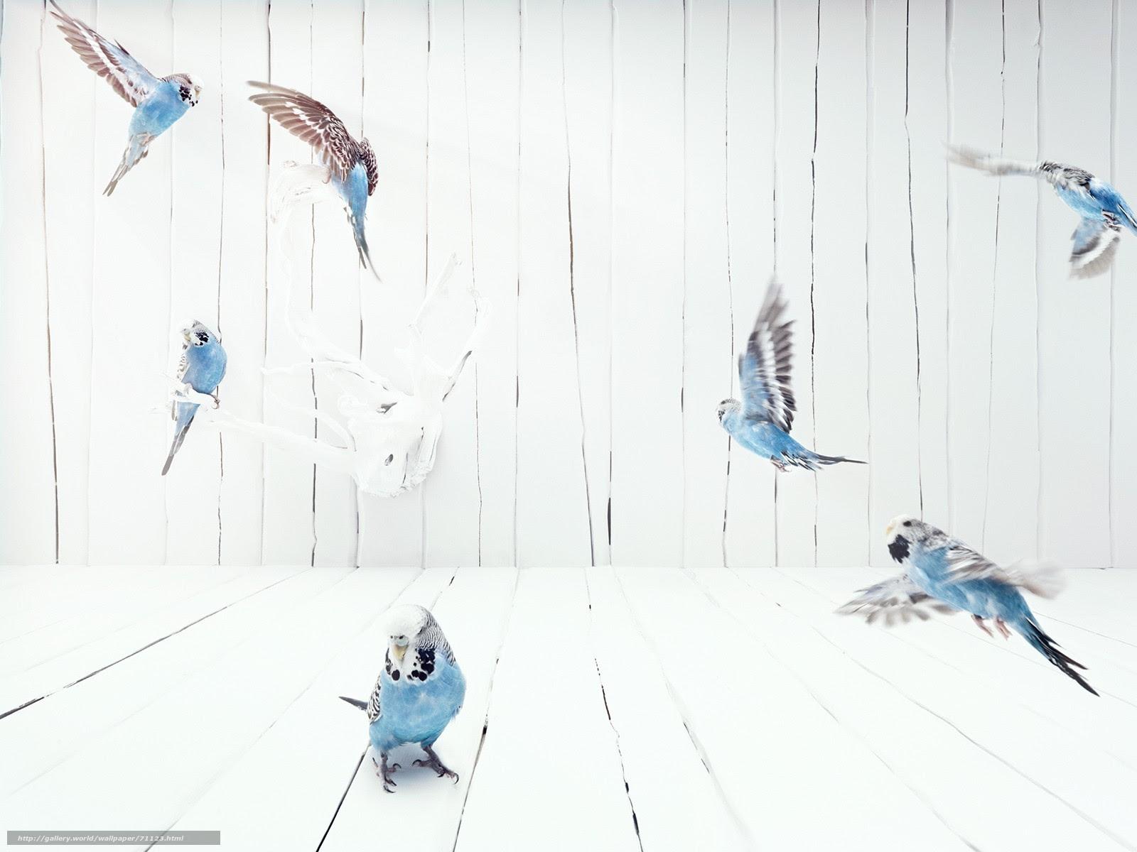 人気の壁紙 セキセイ インコ 壁紙 1万 お気に入りの壁紙オプション