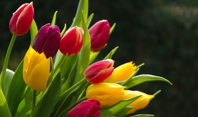 Image result for flower picture
