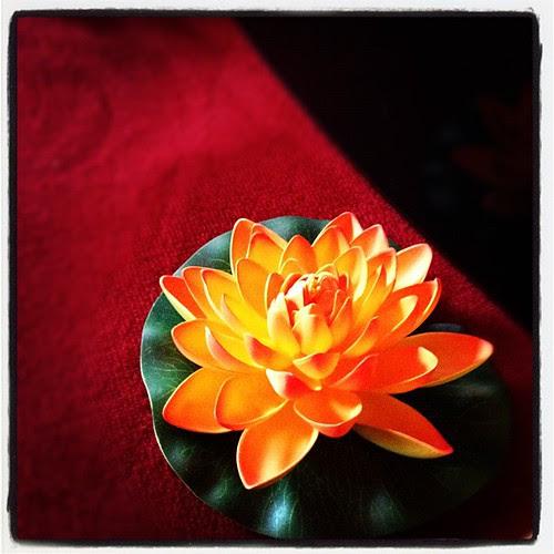 Flower by Jean-Fabien - photo & life™