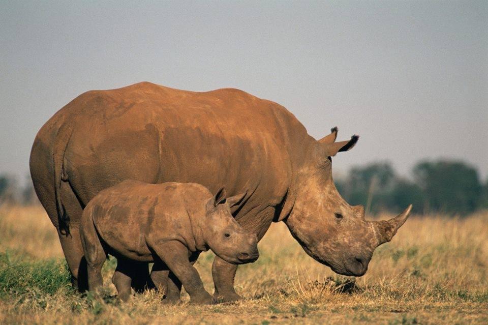 Tráfico de animais selvagens é a 4a atividade ilegal mais lucrativa do mundo