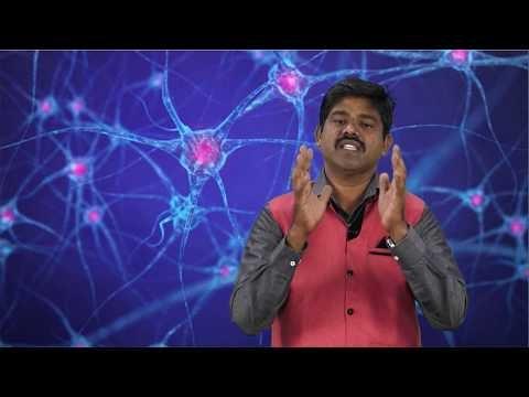 முப்பரிமாணம் Std 11 TM Bio Botany Cell Cycle Kalvi TV