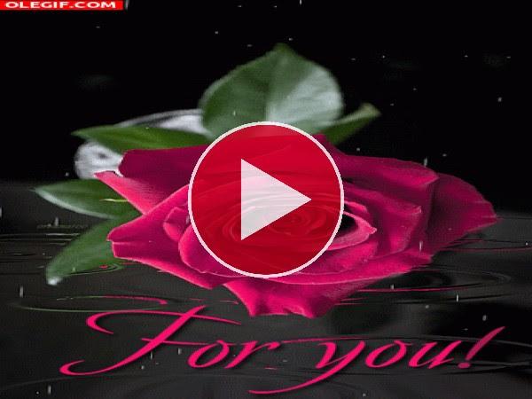Gif Una Rosa Para Ti Gif 4405